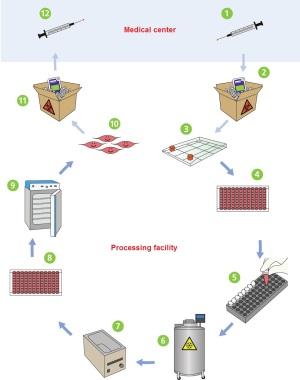 Cryopreservation Process